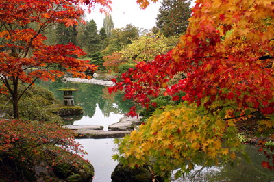 Fall leaves in a Japanese garden
